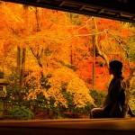 伝統と革新を併せ持つ「京都」の勝因