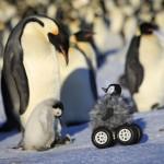 ビットコインの特徴をペンギンにでもわかるようにまとめてみた1