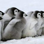 【仮想通貨】今後普及が加速するであろう分散型取引所についてペンギンでもわかるように説明してみた