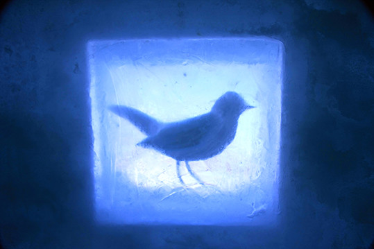 Twitter(ツイッター) 凍結 回避 アカウント